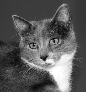 Salon Animalier de Périgueux - Les chats