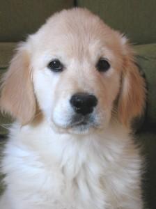Salon Animalier de Périgueux - Les chiens