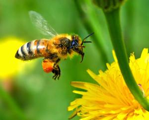 Salon Animalier de Périgueux - Les abeilles